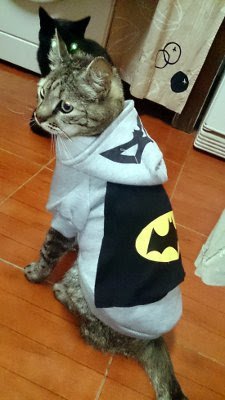BatCat from Carlos' cat shelter
