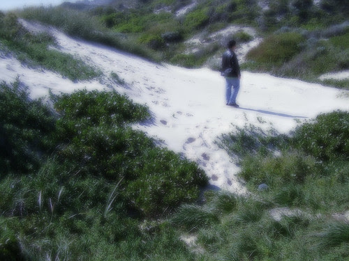 Swifty At Sandy Dunes Of The Perth City Beach