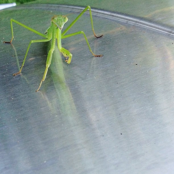 Look who we found resting on our grill this evening...
