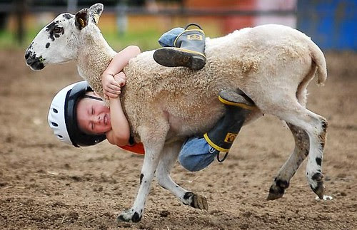 sheep & kid