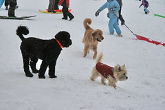 dogs on the sledding hill