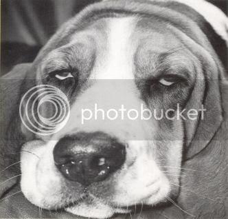 Sad Dog - Learned Helplessness