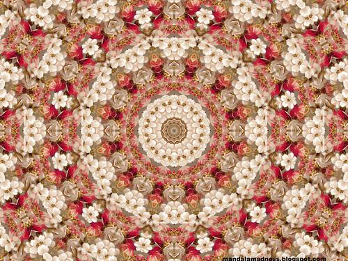 Floral Mandala Desktop Wallpaper