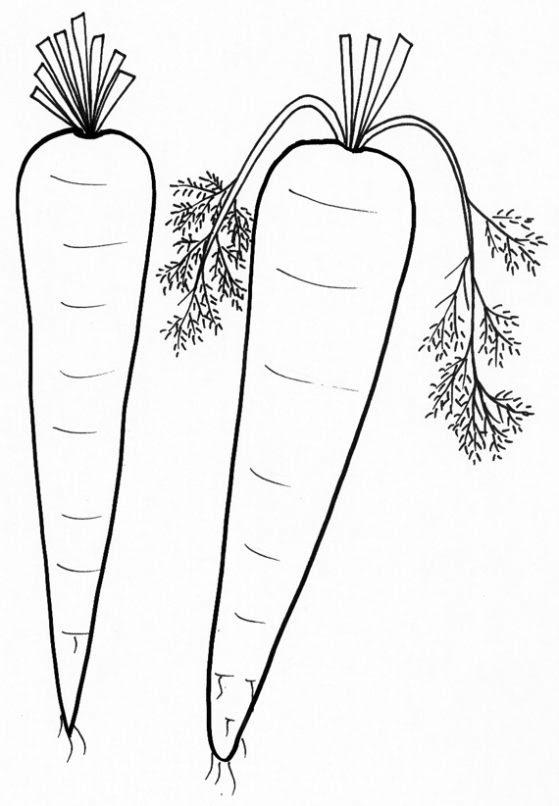 Dibujo De Zanahorias Para Colorear Dibujos Infantiles De Zanahorias