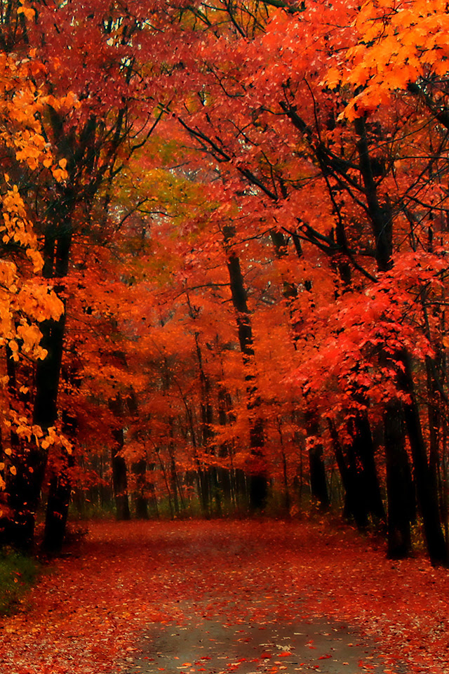 Red Autumn iPhone Wallpaper HD
