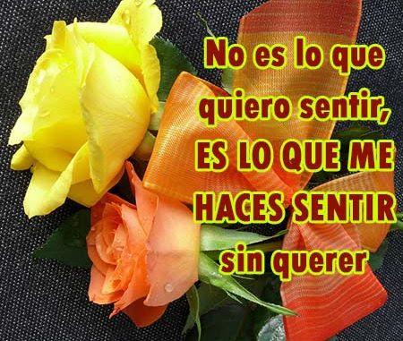 Imagenes De Rosas Amarillas Con Frases De Amor Rosas De Amor