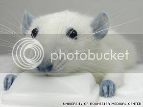 lab_rat,BBG,animal_testing,peta_