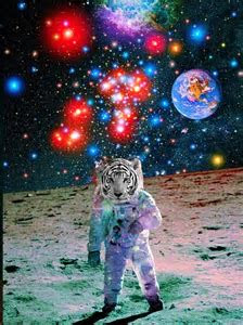 113 best ooOO SPACE CATS (they're coming) OOoo images on