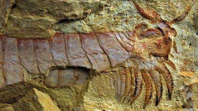 Descubren una criatura marina de más de 500 millones de años