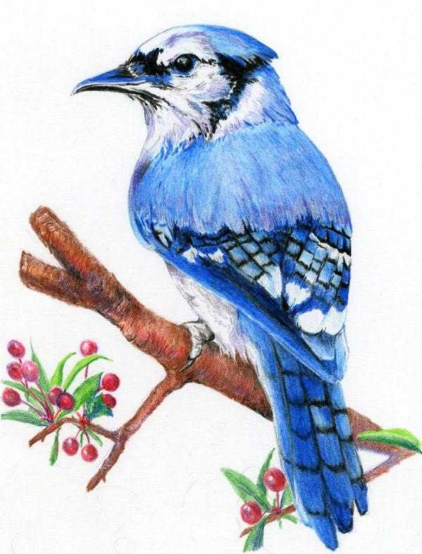 Bird Art Pencil Drawing