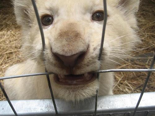 cub face el zoo