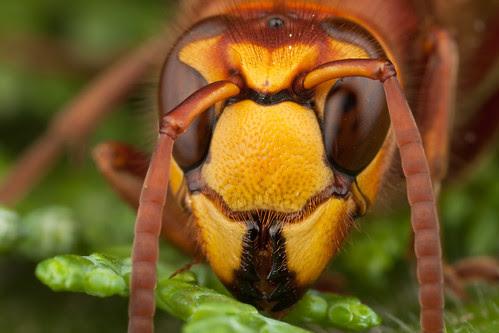 End Of Season Wasp #2