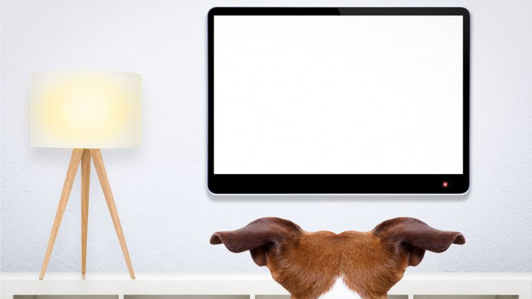 Si un perro muestra interés en lo que ve en la televisión, es probable que pueda aprender, señalan los expertos