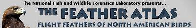 feather atlas header