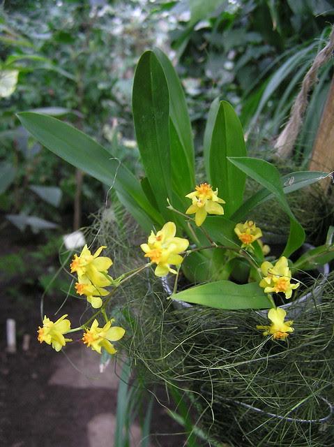 Tallinn BG Orchid Show 2014