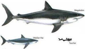 perbandingan antara hiu