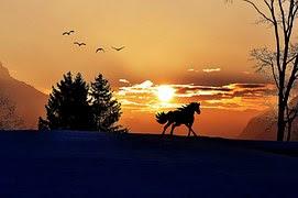 해돋이, 아침, 하늘, Morgenstimmung, 햇빛, 조명, 말
