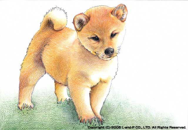 柴犬 犬好き必見色んな種類のかわいい犬のイラスト画像特集