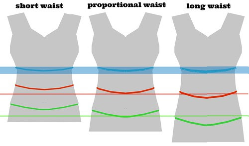 torso lengths 2