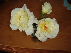 The white rose bush lives to produce more flowers