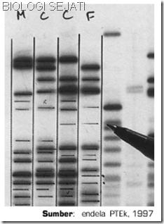 Perbandingan_DNA