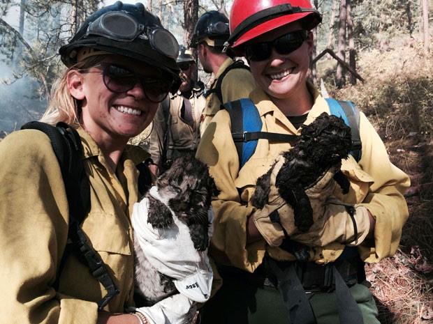 Bombeiras seguram filhotes de puma resgatados durante combate a incêndio em floresta em Montana, nos EUA (Foto: Bitterroot National Forest/AP)