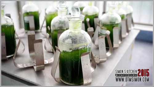 台灣綠藻10.jpg