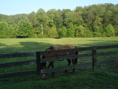 horse and fence (1)