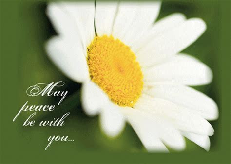 Peace Be With You, Daisy  Free Thinking of You eCards