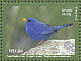 Blue Finch Porphyrospiza caerulescens