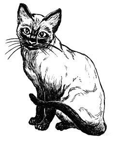 Cat (Siamese) (PSF)
