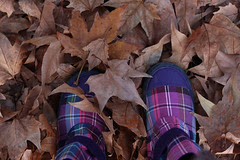 leaves and boots