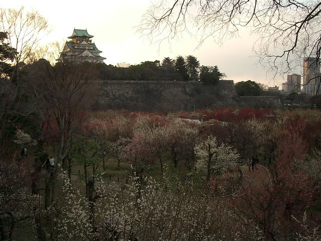 plum grove park(Osaka castle)