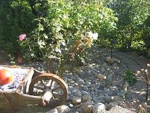 Älskade trädgård...