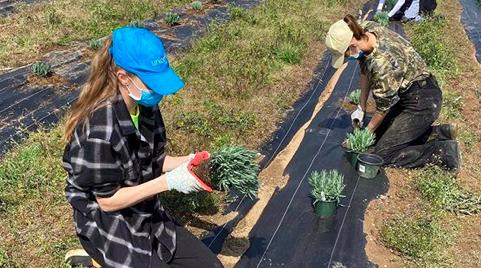 Avatar of Yolanda Hadid Posted Photos of Pregnant Gigi Hadid Planting Lavender on Her Farm
