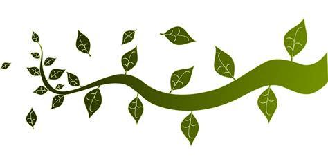 gambar vektor gratis cabang daun alam pohon ranting