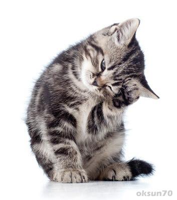 gratis Katzenfoto - Viele süße Katzenbilder und ...