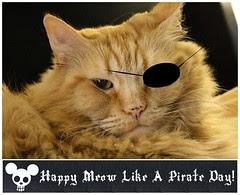 Jasper Meow Like A Pirate