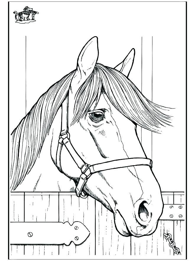 Quarter Horse Coloring Pages at GetColorings.com | Free ...
