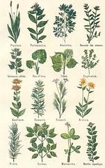 plantes medicinales 2
