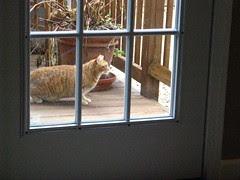 Bella from next door visits