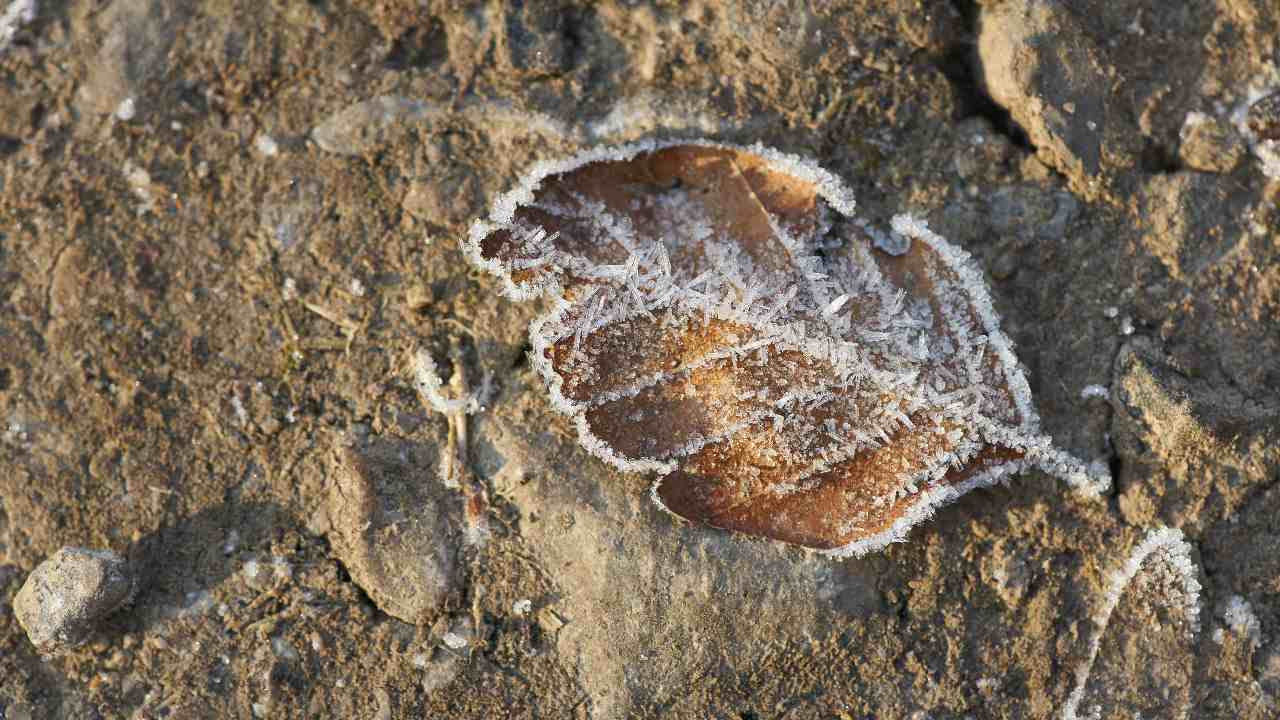 A couple of 20 cm by five cm fossilised leaves of genus Ptilophyllum have been found in Dudhkol mountain. Representational Image