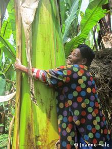Photo: A woman hugs an ensete plant