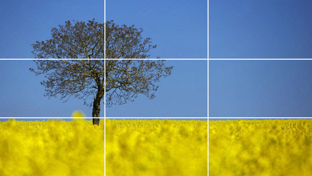 Photograph of a generically placed tree and horizon line.