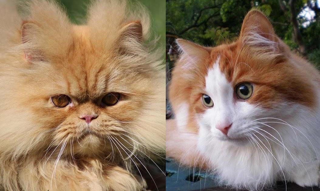 Nama Untuk Kucing Peliharaan 81021 Nama Untuk Kucing Comel Lucu Dan Unik