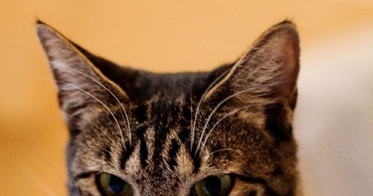 why do cats flex their paws
