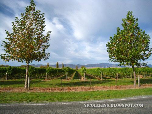 malborough wine trail