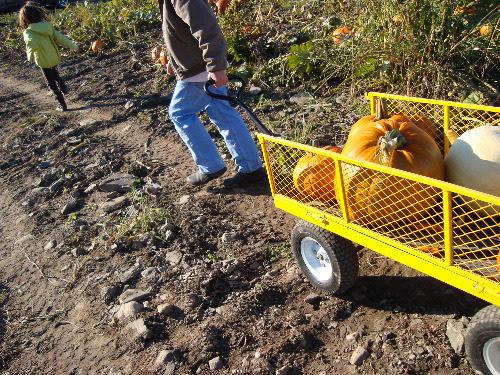 pumpkin pulling