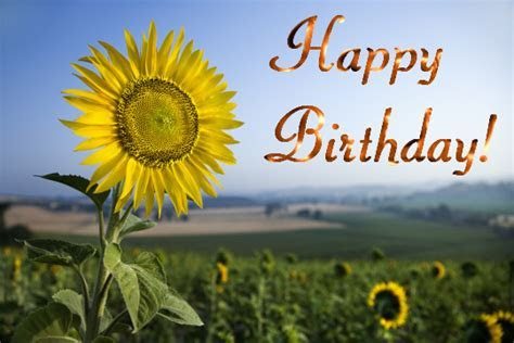 Birthday Sunflower  Free Flowers eCards, Greeting Cards
