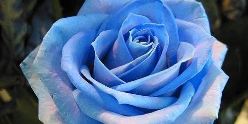 Significado De Las Rosas Florpedia Com